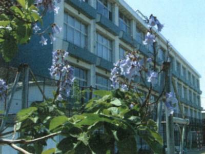桐の木が花を咲かせました